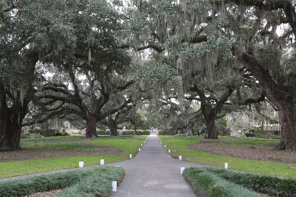 Live Oaks Avenue with Spanish Moss, Brookgreen Gardens, SC